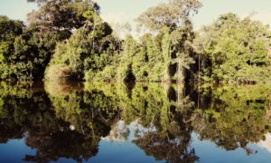 athaHatha Yoga hanuman hidden in peruvian jungle